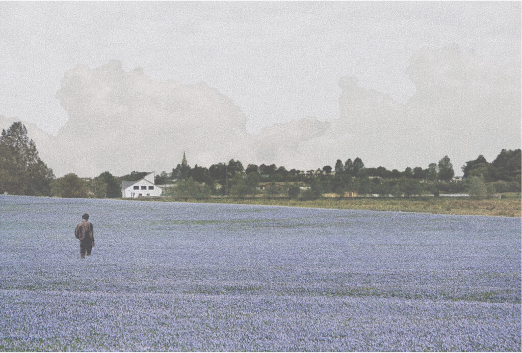 The new flax fields